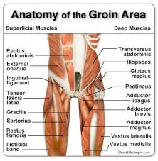 Muscle Recovery Time Chart Groin Muscle Tear Recovery Time Anatomy Of The Groin