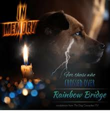 For Thode Who Crossed Over Rainbow Brioge Condolences From The Dog