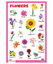 Assamese Flower Chart Flowers Educational Chart English