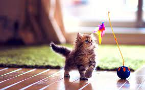 Cute HD Wallpapers - Top Free Cute HD ...