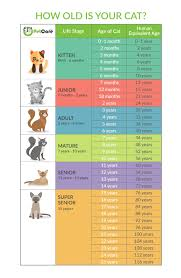 Cat Years Calculator Cats Age To Human Years Petcare