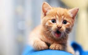 Free download Cute cat wallpapers Cute ...