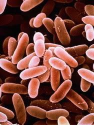 Микроорганизмы Виды микроорганизмов микроорганизмы