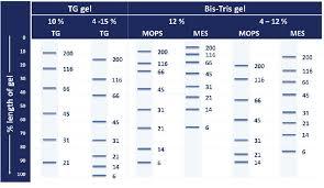Gel Migration Chart