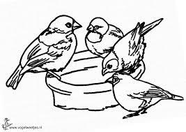 Vogelweetjes Mooie Vogel Kleurplaten Voor De Kinderen