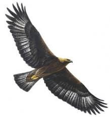 Small Picture The Golden Eagle Fun Kids the UKs childrens radio station