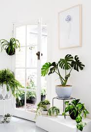 Small Picture 1111 best Green room images on Pinterest Plants Indoor plants