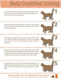 Prototypal Average Cat Weight Chart Tabby Cat Weight Chart
