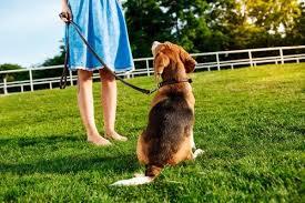 Billedresultat for foto af ulydig hund