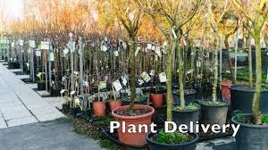 Frank Sharum Landscape Design Frank Sharum Landscape Design Garden Center Youtube