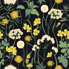 blooming wild yellow flowers