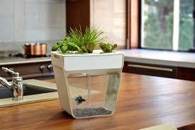 indoor apartment gardening. Plain Apartment Back To The Roots AquaFarm Inside Indoor Apartment Gardening D