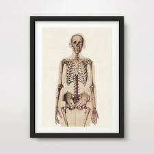 Details About Vintage Sepia Old Paper Skeleton Art Print Poster Decor Wall Chart Illustration