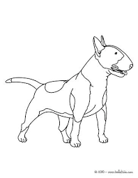 Dachshund Coloring Page Bull Terrier Coloring Page Coloring Page