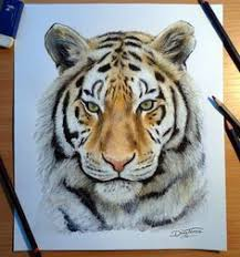 realistic drawings of animals in color. 25 Beautiful Animal Drawings For Your Inspiration How To Draw Animals 11 Tiger Drawing Dinotomic On Realistic Of In Color