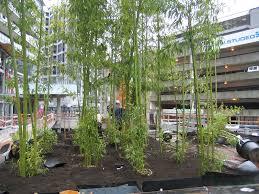 Small Picture Bamboo Garden Nursery