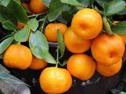 Mandarin Tangerines Difference Between Mandarin And Clementine Pediaa Com