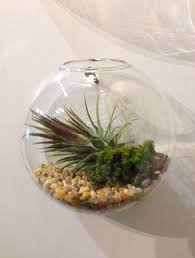 diy wall mounted plant terrarium for awesome indoor decor