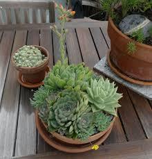 plant a tabletop succulent bowl