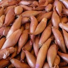 Cebula szalotka 0,25kg - Warzywa - Warzywa - Sklep internetowy Albert Fresh