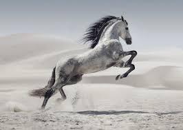 Résultat de recherche d'images pour 'cheval'