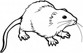 Small Picture Rat Coloring Pages Online Keanuvillecom