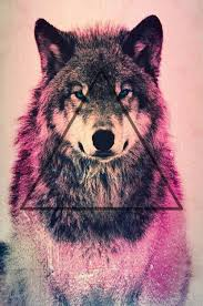 wolf wallpaper iphone 6. Unique Wallpaper I Just Lost A Follower Had 6 Followers Now Have 5 Weird  But  Dont Rlly Care 3  Hipster Trippy Shtuff Pinterest Wallpaper Wolf Wallpaper  For Wallpaper Iphone D