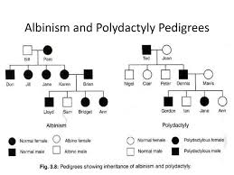 Polydactyly Pedigree Chart Genetic Disorders Ppt Download