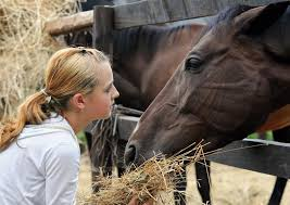Equine assisted therapy for teens information