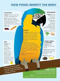 Cockatiel Diet Chart Food For Parrots Parrot Food Infographic Macaw Parrot