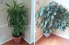 office plants for sale. Wonderful Plants I Made Cprints Of The  And Office Plants For Sale E