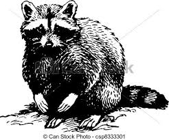 White On Background Racoon Isolated