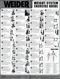 multi gym routines search exercise marcy platinum home workout chart pictures