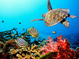 coral reef essay coral reefs mrs franks esl corals and coral reefs  coral reefs mrs franks esl