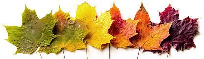 Fall Leaf Color Chart Leaf Watch 2019