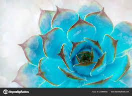 Light Blue Cactus Bright Green Blue Cactus Succulent Soft Light Gentle Focus