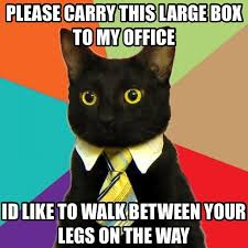 Not enough business cat lately - Imgur | Business Minded ... via Relatably.com