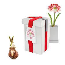 Medicinal Plants You Can Give As Christmas GiftsChristmas Gift Plants