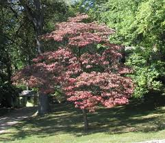 Download Best Trees To Plant In Front Yard  Solidaria GardenGood Trees For Backyard