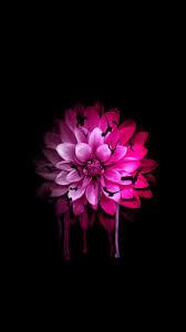 pink flower wallpaper iphone