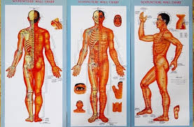 Chi Meridians Chart Chi Energy And The 12 Meridians In Your Body Health