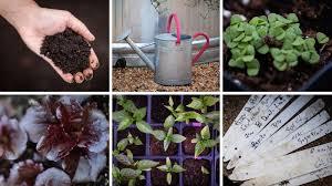 how to start a garden the salt life