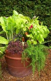 container garden vegetables. Find A Good Location. Vegetables Container Garden