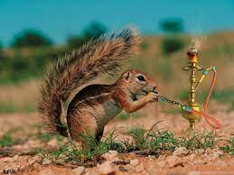 Funny Animals Hd Desktop Wallpapers ...