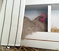 it s important to provide a nice clean quiet safe place for your ens to lay their eggs the nesting boxes should be a sanctuary where your hens feel