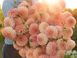 find flowers floret flowers