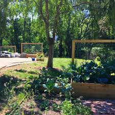 completed goat wire trellises mounted to various raised beds