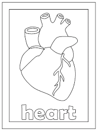 Small Picture Human Heart Coloring Pages PrintableHeartPrintable Coloring