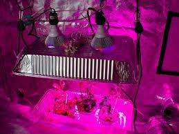 Best Led Grow Light For Peppers 2015 78 Grow Light Full Spectrum 22 Watts No Heat 6 Steps