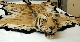 ont white tiger skin rug black pattern surface texture fake